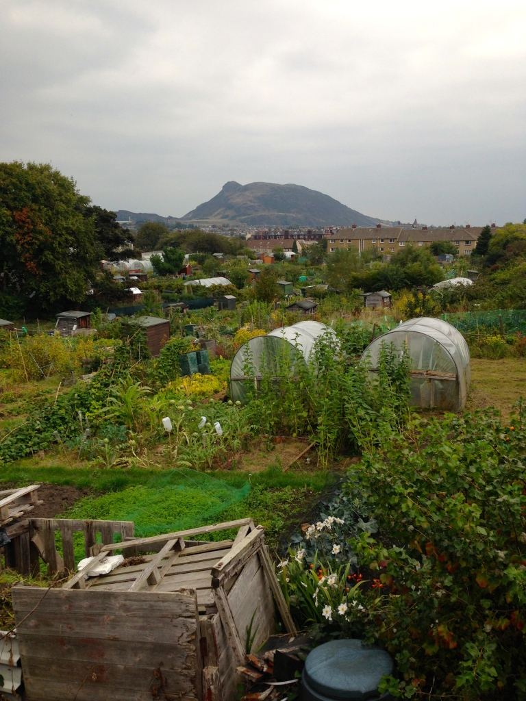 Edinburgh Allotments by Áine Ryan